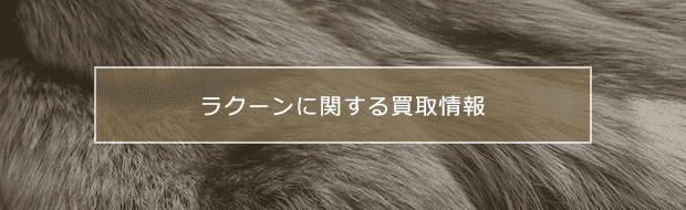 raccoon買取に関する様々な情報をご紹介